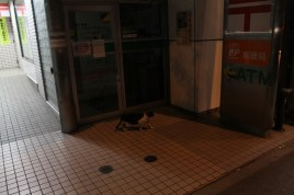 Saw tons of cats on my way back.