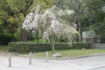 大阪城公園 20