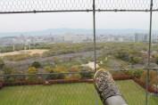 大阪城 11