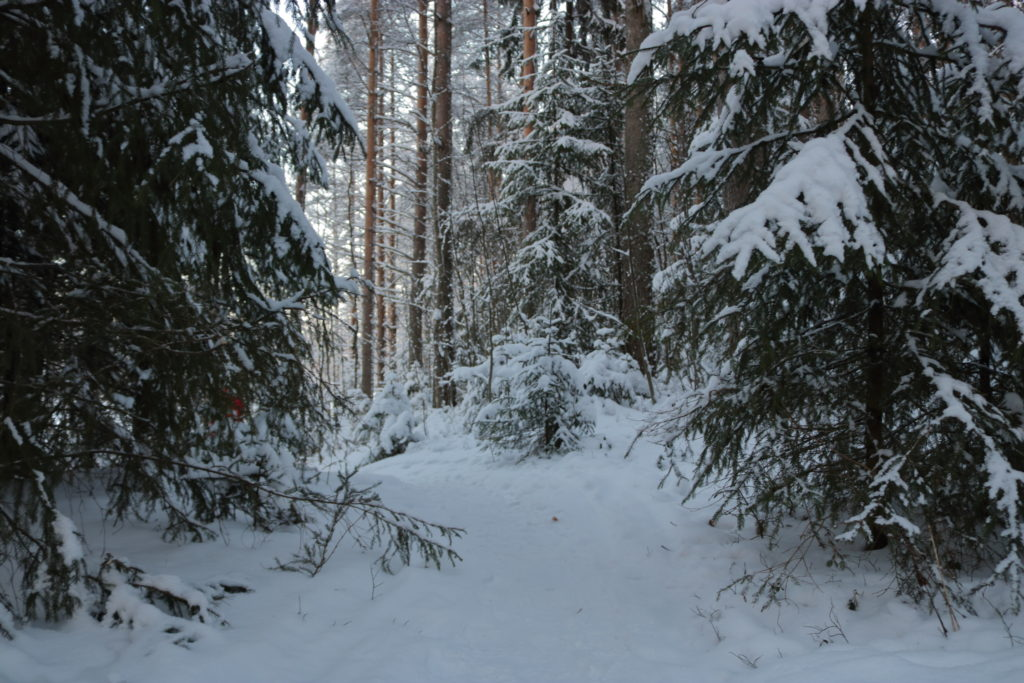A small path heading deeper into the snowy forest