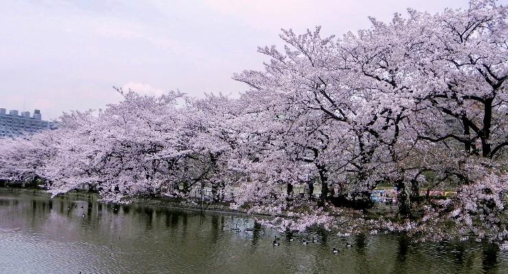 Kolam Taman Ueno