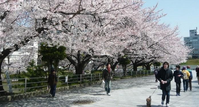 Taman Maizuru