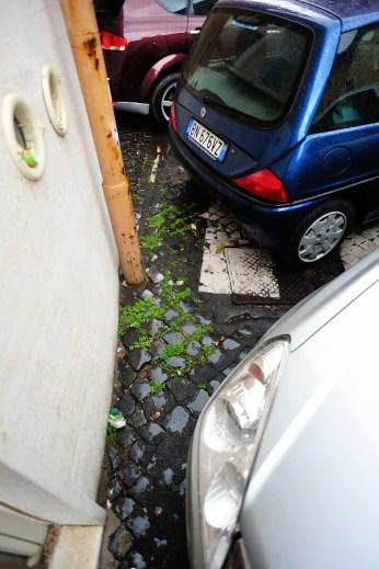 Зебра упирается в стену, и на ней запаркована машина.