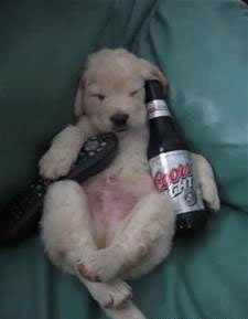 Dog_with_Beer