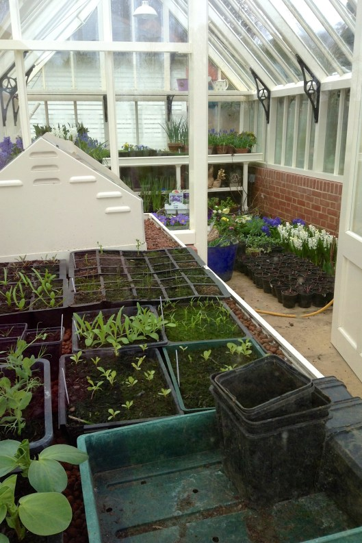 A Full Greenhouse