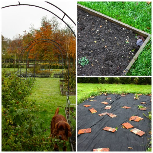 Vegetable Beds Collage