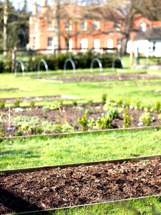 Cutting Garden February