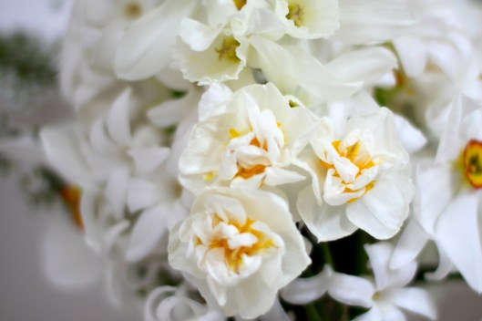 Narcissi White Cheerfulness