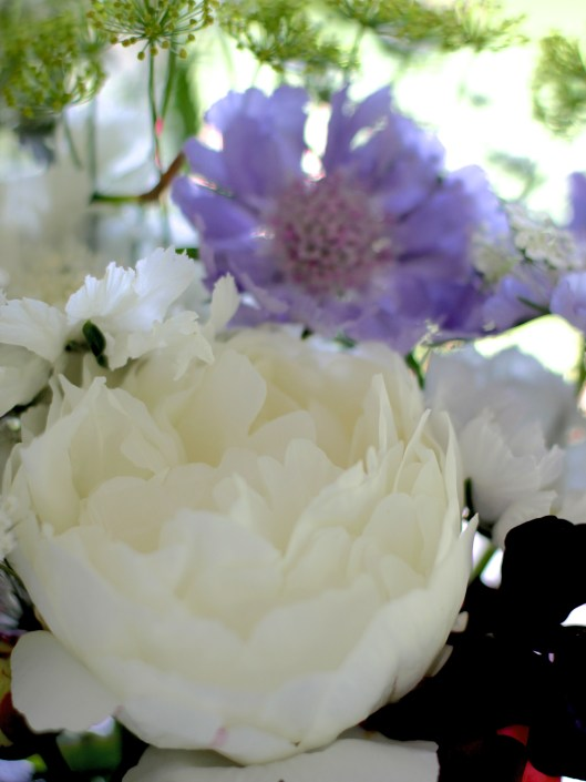 White Peony & Blue Scabious