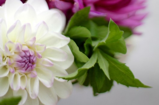 Dahlia-Eveline-With-Mint