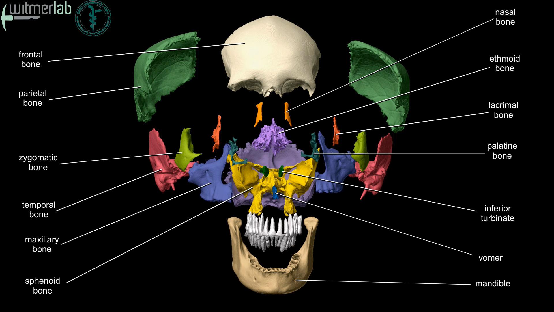 Ou Hcom 3d Interactive Human Anatomy