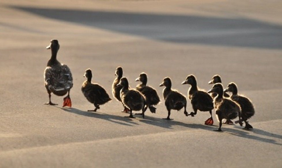 Are Your Employees Leaving Because of Unethical Leadership - People Development Network