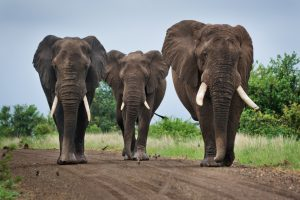 Three Elephants In Learning and Development - People Development Network