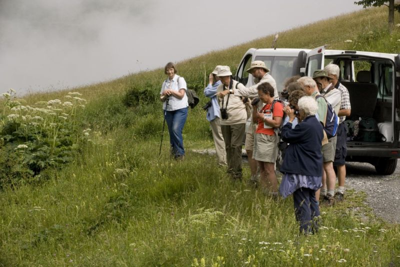 Group watching roosting butterflies in the french Pyrenees.