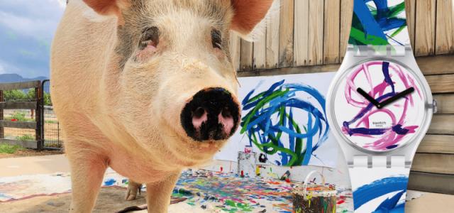 Pigcasso: Ο ζωγράφος χοίρος στη Νότια Αφρική