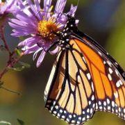 Μεξικό: Νέα δολοφονία οικολόγου σε βιότοπο σπάνιας πεταλούδας
