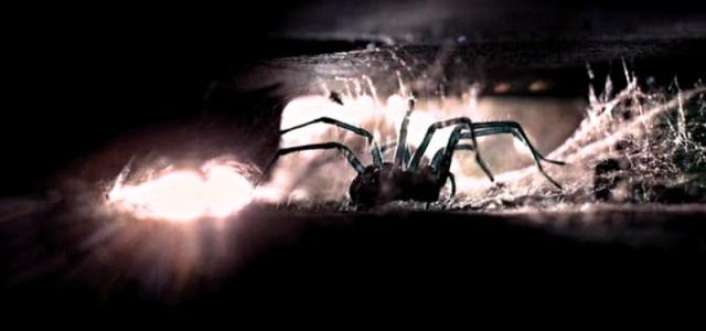 Αράχνες: Οι εισβολείς του φθινοπώρου. Η δυτική αραχνοφοβία οφείλεται στα ΜΜΕ;