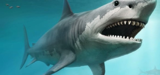 Γιγάντιοι αρχαίοι καρχαρίες είχαν τεράστια μωρά που έτρωγαν τα αδέλφια τους στη μήτρα