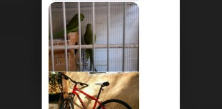 Craigslist Parrot and Bike for Guitar