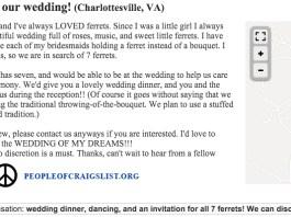 Craigslist Ferrets for our wedding