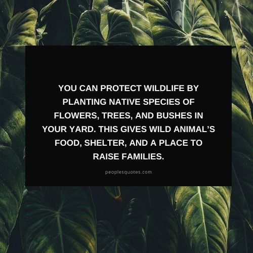 how to protect wildlife sayings and images