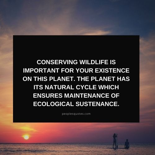 Conserving wildlife quotations