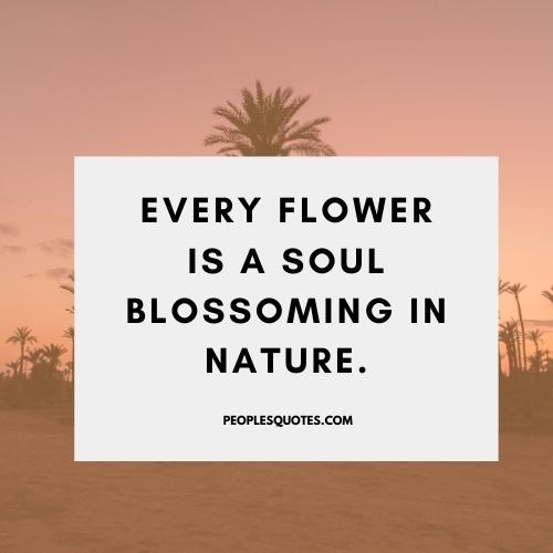 The Beauty Of Nature Quotes