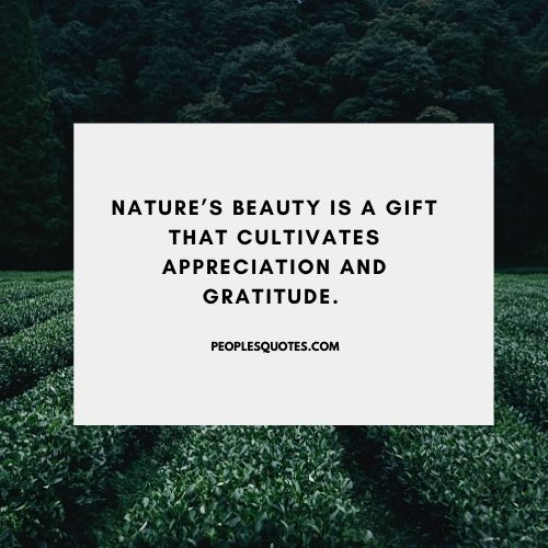 nature's beauty quotes