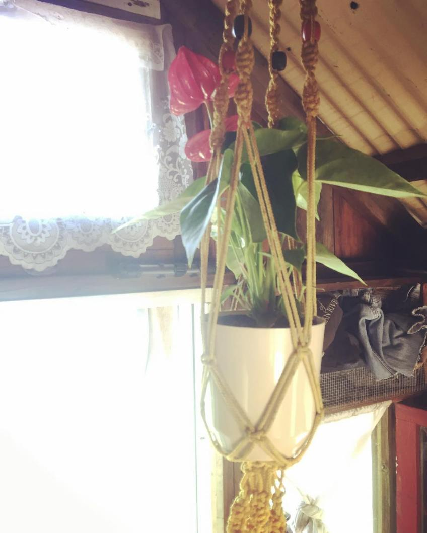 Anthurium in the shantyboat. These civilizing touches are an important part of our wild journey