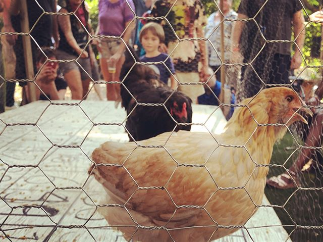Chicken Shit Bingo at the Bushwick City Farm #bushwick #brooklyn #nyc #Shantyboat