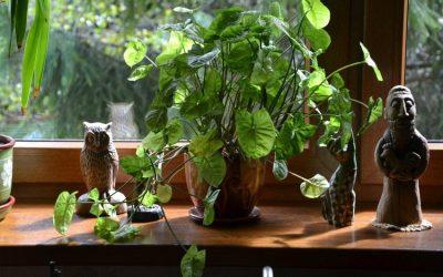 5 trucos para cuidar tus plantas de interior