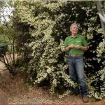 Arbustos básicos de jardín