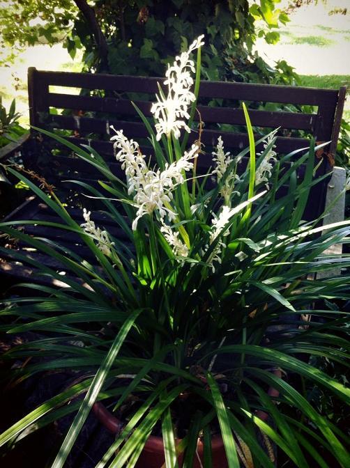 Bayas blancas en el jardin de Pepe Plana 2