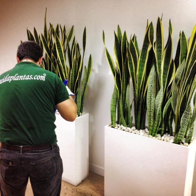 Cuidaplantas y pepeplana.com