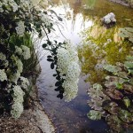 El estanque y sus grandes secretos