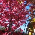Calendario de noviembre: que hacer en el jardín