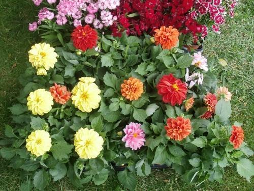 Plantar flores de jardín para disfrutar su color y aroma en primavera