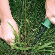 10 Enfermedades de las plantas