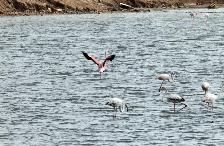 Plástico en Parque Natural de San Pedro junto al Mar Menor San Pedro del Pinatar Murcia PEPE RIQUELME FOTOS peperiquelmefotos.com PALACIO DE LOS DEPORTES MURCIA UCAM FOTOGRAFÍA DEPORTIVA BALONCESTO BASKET FUTBOL VOLEY VOLEIBOL FUTBOL SALA AGENCIA PRENSA DEPORTIVA FOTOS DEPORTIVAS AGENCIA GRAFICA DEPORTIVA MURCIA