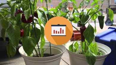 Come-coltivare-peperoncini-in-casa-1