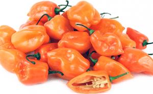 classifica peperoncini piccanti Habanero Orange