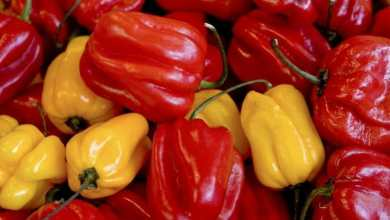 habanero red proprietà peperoncino