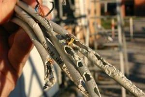 Usi alternativi del peperoncino piccante cavi elettrici