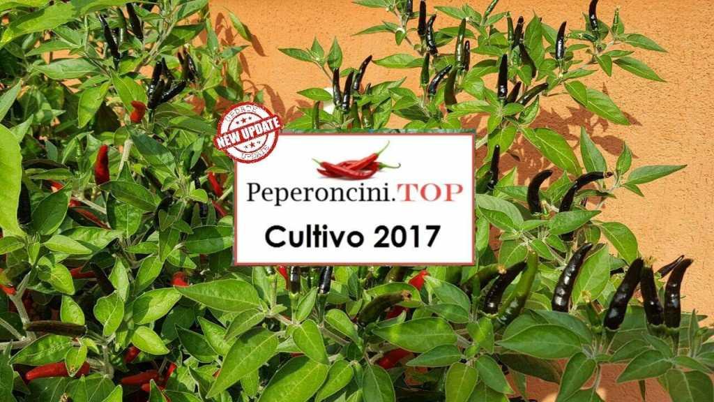 Come coltivare peperoncini