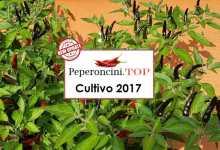 peperoncino piccante 2017