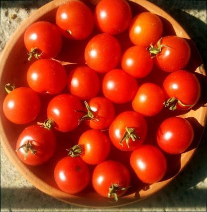 Tomate // Miel du Mexique