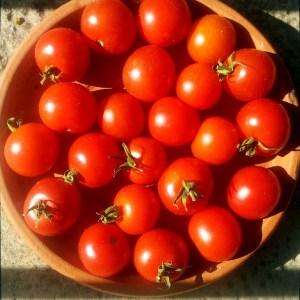 Tomate // Miel du Mexique (Graines)
