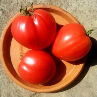 Tomate // Cœur de Bœuf rouge