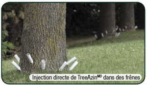 Injection-TreeAzin-Pepiniere-Villeneuve