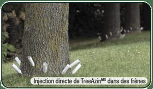 Injection TreeAzin insecticide contre l'agrile du frêne